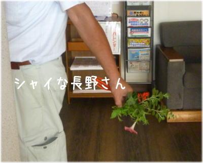 長野さん花