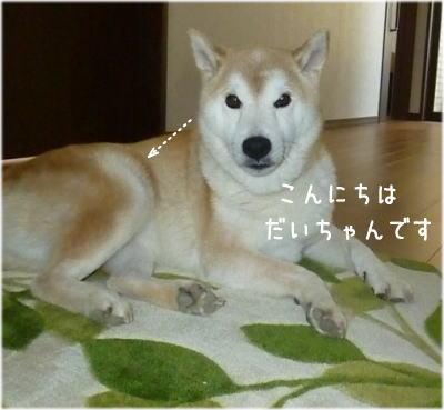 harigane犬1