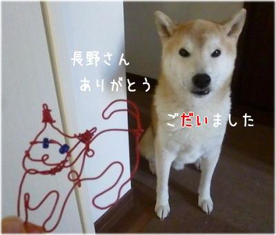 harigane犬3